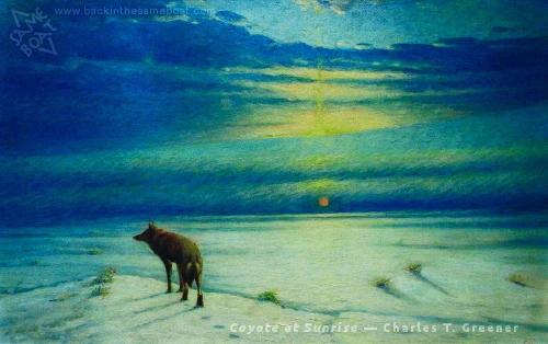 Greener's Coyote at Sunrise Image on Backinthesameboat.com